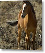 Young Wild Mare   #0307 Metal Print