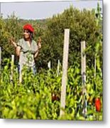 Young Woman Harvesting Red Peppers Metal Print