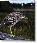 Youngster Metal Print