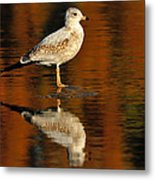 Youthful Reflections Metal Print