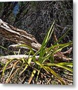 Pedernales Park Texas Yucca By The Dead Tree Metal Print