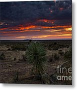 Yucca Sunset Metal Print