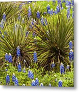 Yucca With Bonnets Metal Print