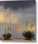 Yuccas, Rainbow And Virga Metal Print