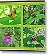 Zabulon Skipper Butterfly - Poanes Zabulon Metal Print