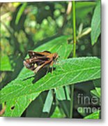 Zabulon Skipper Butterfly - Poanes Zabulon - Female Metal Print