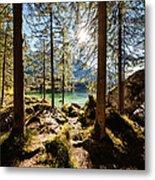Zauberwald In Autumn Metal Print