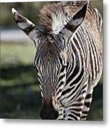 Zebra Crossing V7 Metal Print