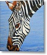 Zebra Drink Metal Print