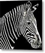 Zebra Faa Contest Metal Print