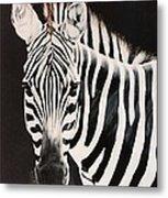 Zebra facing left Metal Print