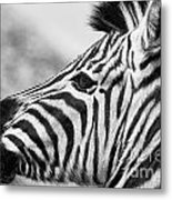 Zebra Head Profile Metal Print