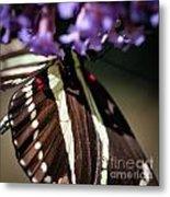 Zebra Heliconian Heliconius Charithonia Metal Print