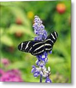 Zebra Longwing Metal Print by Laurie Perry