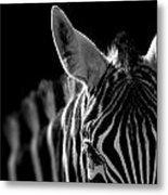 Portrait of Zebra in black and white Metal Print