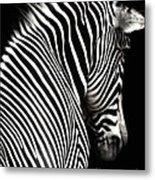 Zebra On Black Metal Print