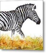 Zebra Panoramic Metal Print