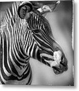 Zebra Profile In Black And White Metal Print