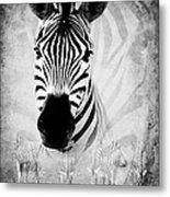 Zebra Profile In Bw Metal Print