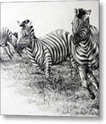 Zebra Running Metal Print