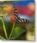 Zebra Striped Butterflies Metal Print by Cari Gesch