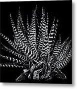 Zebra Succulent Metal Print