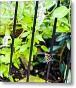 Zebra V Metal Print