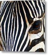 Zebra Vibrations Metal Print