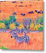 Zebras Above The Beast Metal Print