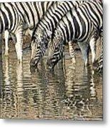 Zebras At Water Hole Metal Print
