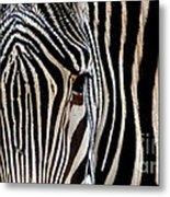 Zebras Face To Face Metal Print