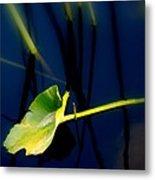 Zen Photography V Metal Print