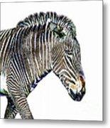 Zephyrus Zebra IIi Metal Print