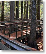 Zig Zag Thru The Cypress Trees Metal Print