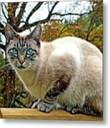 Zing The Cat In The Fall Metal Print