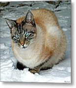 Zing The Cat On The Porch In The Snow 2 Metal Print