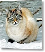 Zing The Cat On The Porch In The Snow Metal Print