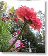 Zinnia Side View Metal Print