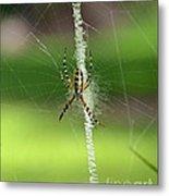 Zipper Spider Metal Print