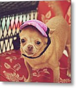 Zoe's Visor Metal Print by Laurie Search