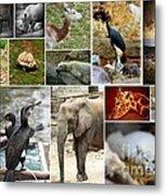 Zoo Collage Metal Print