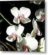 Zoo Orchid Metal Print