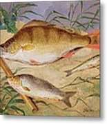 An Angler's Catch Of Coarse Fish Metal Print