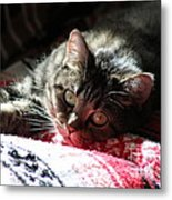 Angel Cat Metal Print