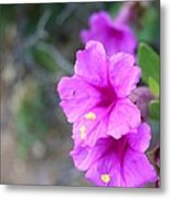 Arizona Wildflower Metal Print by Sharon Mick