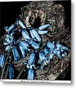 Bluebells And Log Metal Print