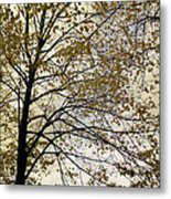Branch Of Tree In Autumn Metal Print