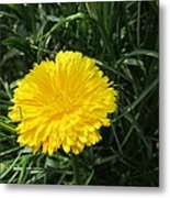 Buttery Single Yellow Flower Metal Print