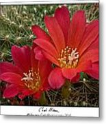 Cacti Bloom Metal Print