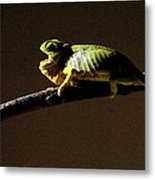 Chameleon On Branch Metal Print